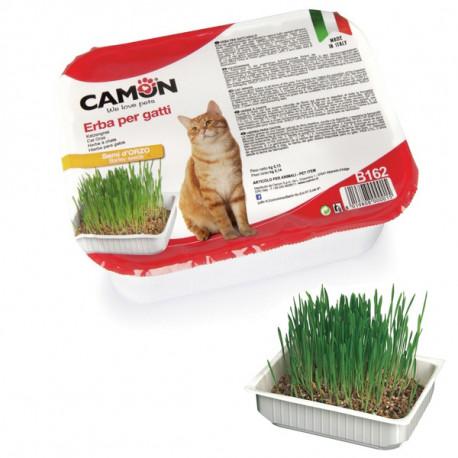 Camon tráva pre mačky z jačmeňa 130g Camon - 1